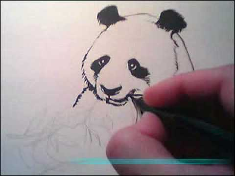 drawing a panda bear part 1 youtube