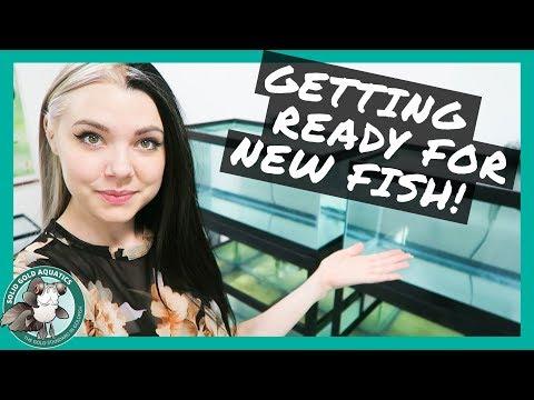 FISH ROOM UPDATE // Preparing for New Fish!
