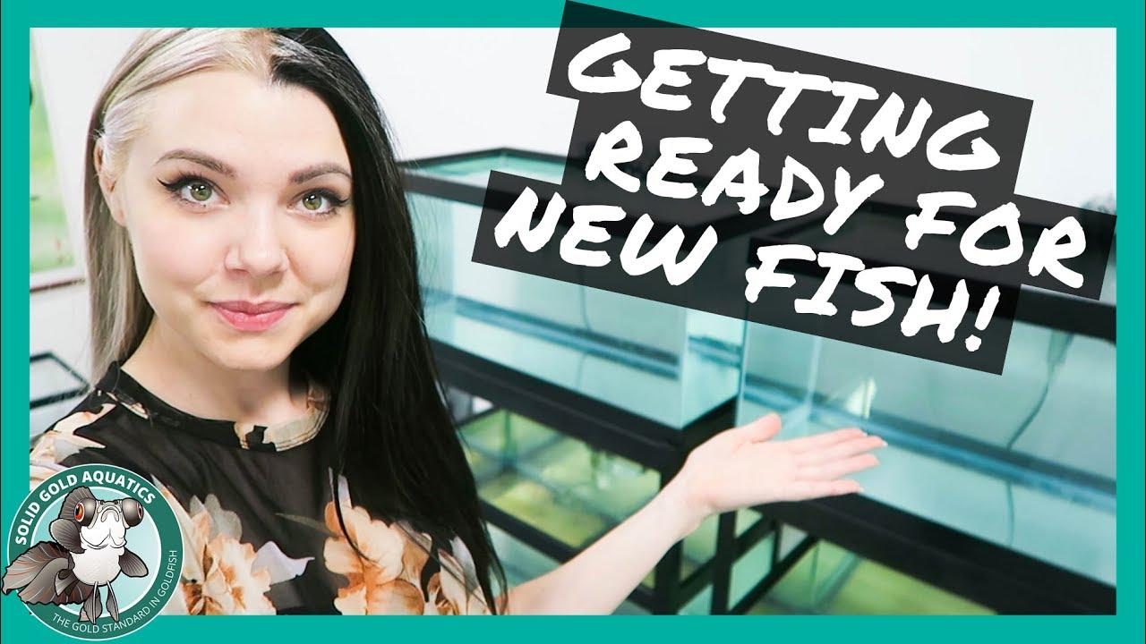 fish-room-update-preparing-for-new-fish