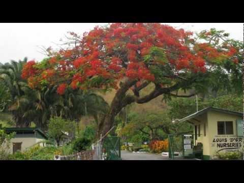 Tobago & Trinidad Caribbean Paradise