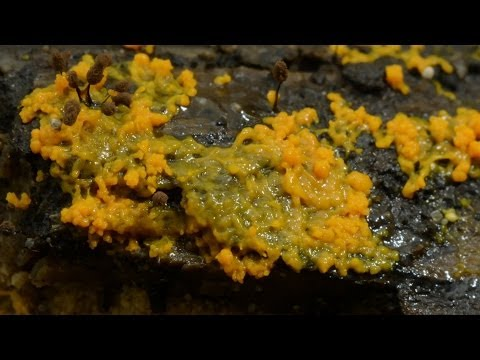 Mould Time-lapse - The Great British Year: Episode 4 Preview - BBC One
