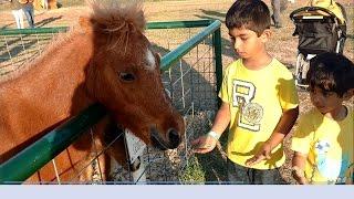 Farmland Adventures-Petting Feeding Old Mac Donald Farm Animals-Pony Ride,Kids Fun Activities