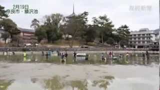 奈良・猿沢池の水抜き