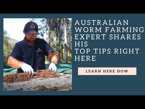 australian-worm-farming-expert-shares-his-top-tips