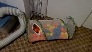 Ferret Owning Tips: Supplies - Part 2 Of 2