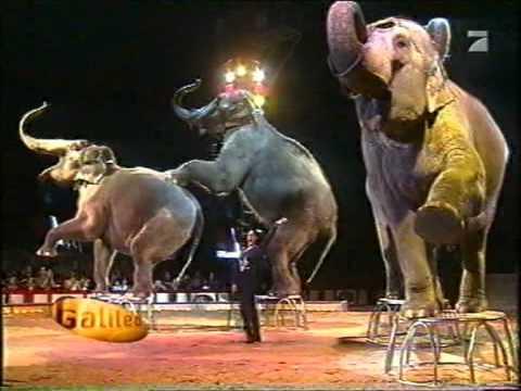 Bad Ansbach 2003 circus krone umsetzung ansbach nach bad mergendheim
