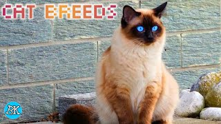 CAT BREEDS Batch 2 | Looking for Cat Pets?