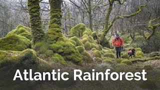 New Favourite Place - Atlantic Rainforest Photography