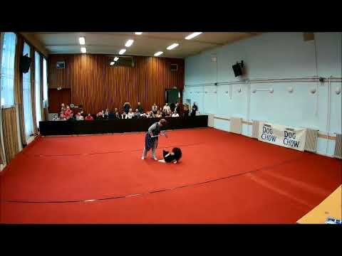 Flow Dog Dancing Hungarian Open 2017