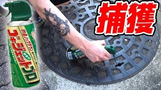 池袋のマンホールにゴキジェットをかけてゴキブリ捕獲成功!!!