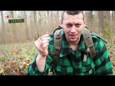 Wo Du extrem scharfe Bärlauchzwiebeln findest VRMag #0 (Doku)
