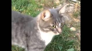 Походка :) кот коты cat cats тимофей животные дача цветы