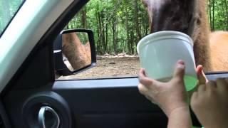 Briarwood Safari in Tennessee