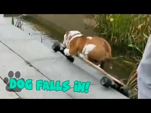 Skateboarding Dog Falls into Pond – Hilarious Dog Fail
