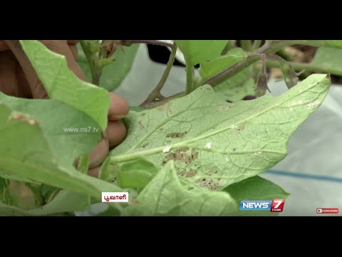 Homemade Organic Pesticide | 'Siriya Nangai Kashayam' & 'Neermore Karaichal' | Poovali | News7 Tamil