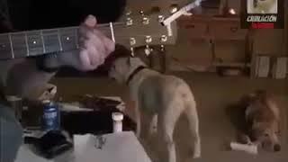 Танцующая собака!!!!!!!!