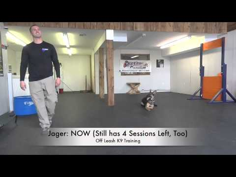 Very Skittish/Scared German Shepherd! See The Difference Just A Few Lessons Made!