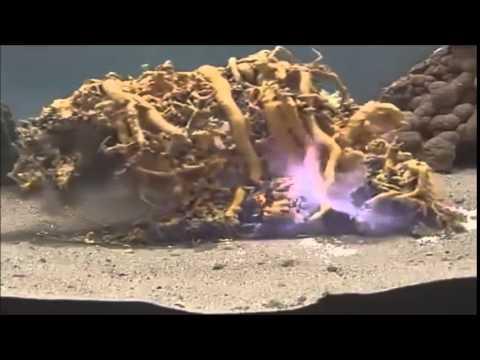 Burning Mercury(II) Thiocyanate