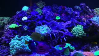 Морской аквариум 2500l(Armenia Erevan)2015(Morskoy akvarium 2500l.(adres.Arshakunyats 53/2).Tel.+37455041122. Artur Vardanyan., 2016-04-07T19:41:18.000Z)