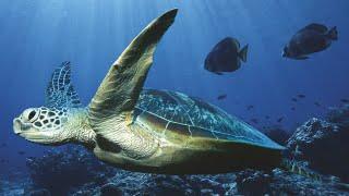 видео Всемирный день океанов