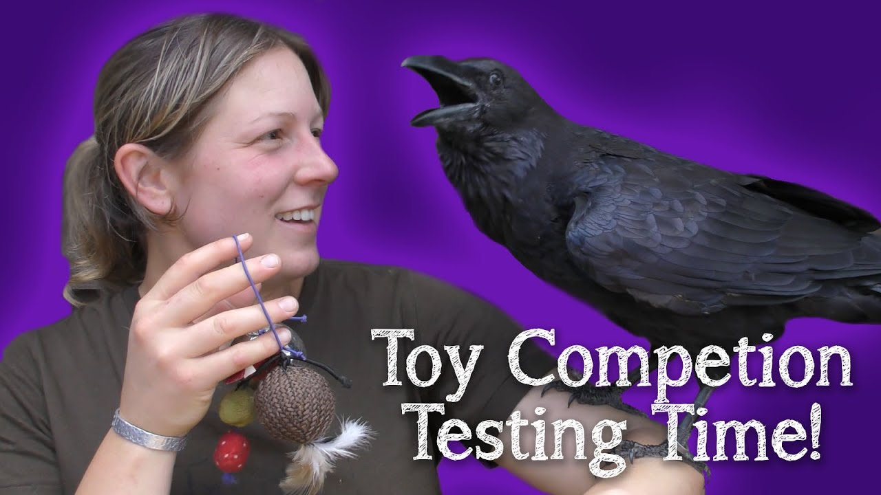 Fable the Raven | Toy Competition | Entries and Winner!