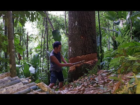 Primitive Skills: Cut the giant tree to inspect the homemade iron axe