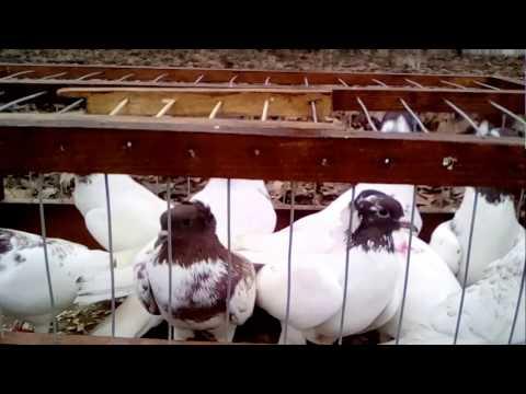 Жар-Птица 2017 - Все выставки 2017