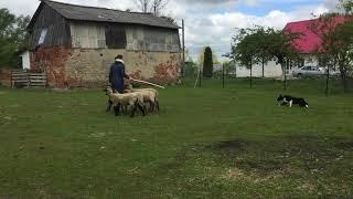 Nery Herding 16.05.2020