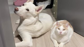 Puppy's amazing behavior of soothing a cat so surprised by the sound outside after rescue.