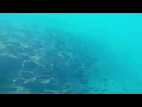 Treasure Beach Reef - Barbados - 08/01/2015