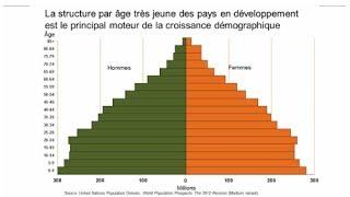 comment construire pyramide des ages