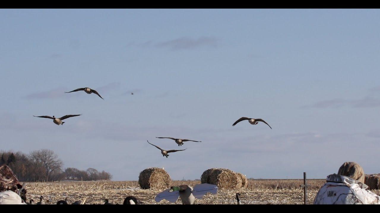 canadian goose hunting north dakota