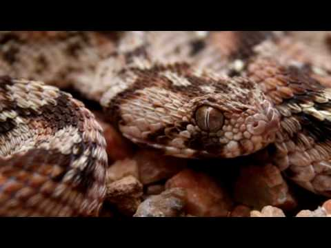 10 Worlds Most Venomous Snakes