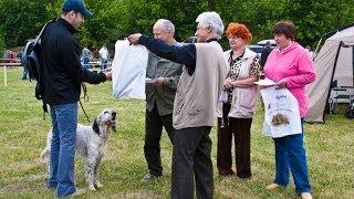 Межрегиональная 116-я Московская выставка охотничьих собак. Награждение (первый день)