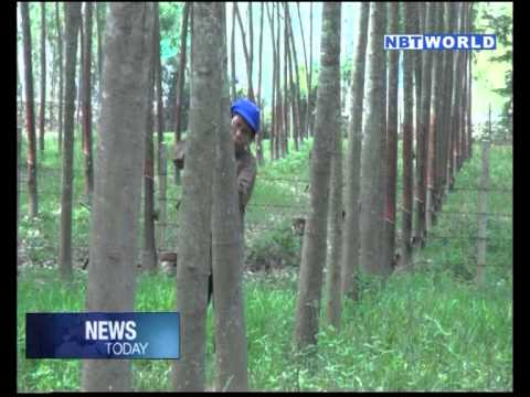 PM Prayut Assigns NCPO to Prevent Rubber Farmers' Demo