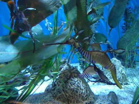 Aquarium Palm Beach