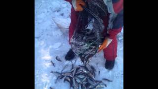 Рыбалка мордой(Зима в Сибири,рыбалке не помеха., 2015-05-31T02:45:03.000Z)