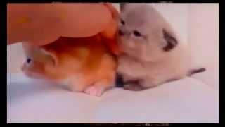 Смешные котята и кошки
