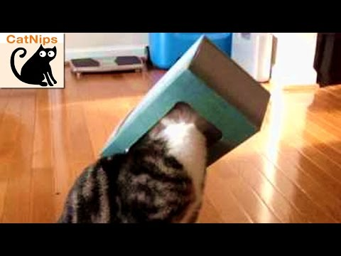 Funny Cat Gets Head Stuck Inside Tissue Box | CatNips