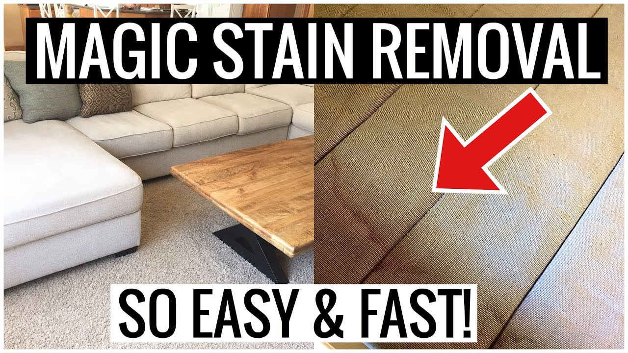 How to REMOVE STAINS and PEE on Couch and Mattress So Easy You Have to  Try This   Andrea Jean