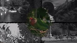 Love birds call the valley home
