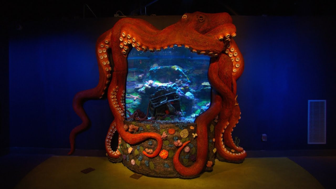 Greensboro science center gets tanked youtube for Octopus fish tank