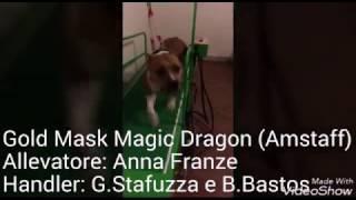 Dog Training by STARKER Hund