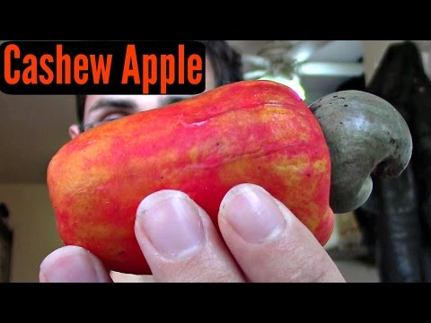 Cashew Apple Review