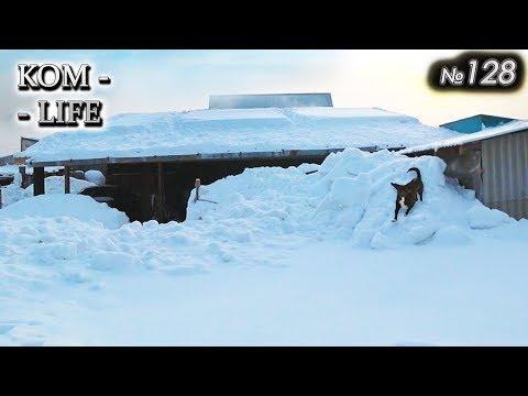 Завалило ❄ СОБАКИ бегают по крышам