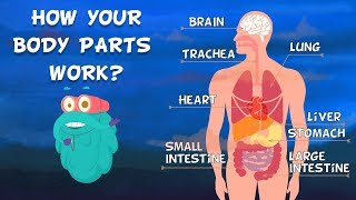 How Do Your Body Parts Work? | Non Stop Episodes | The Dr. Binocs Show | PEEKABOO KIDZ