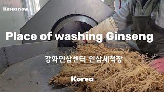 〔4K〕Korea Ginseng /세척장 /Place …