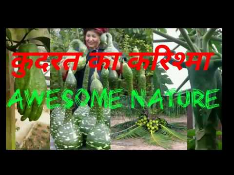 Awesome Natural Creations - कुदरत का करिश्मा। See The Natural Magic In Different Forms.
