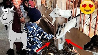 ТАНЦУЮЩИЙ ЕНОТ Городская ферма ВДНХ Good Boy Mark кормит животных Видео для детей 0+