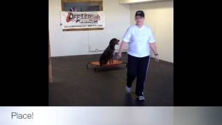 Coonhound With Great Obedience! Dog Training, Woodbridge, Va